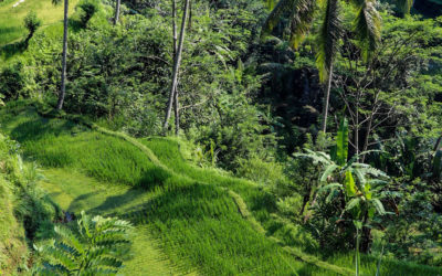 Nature in Bali and its environmental issues