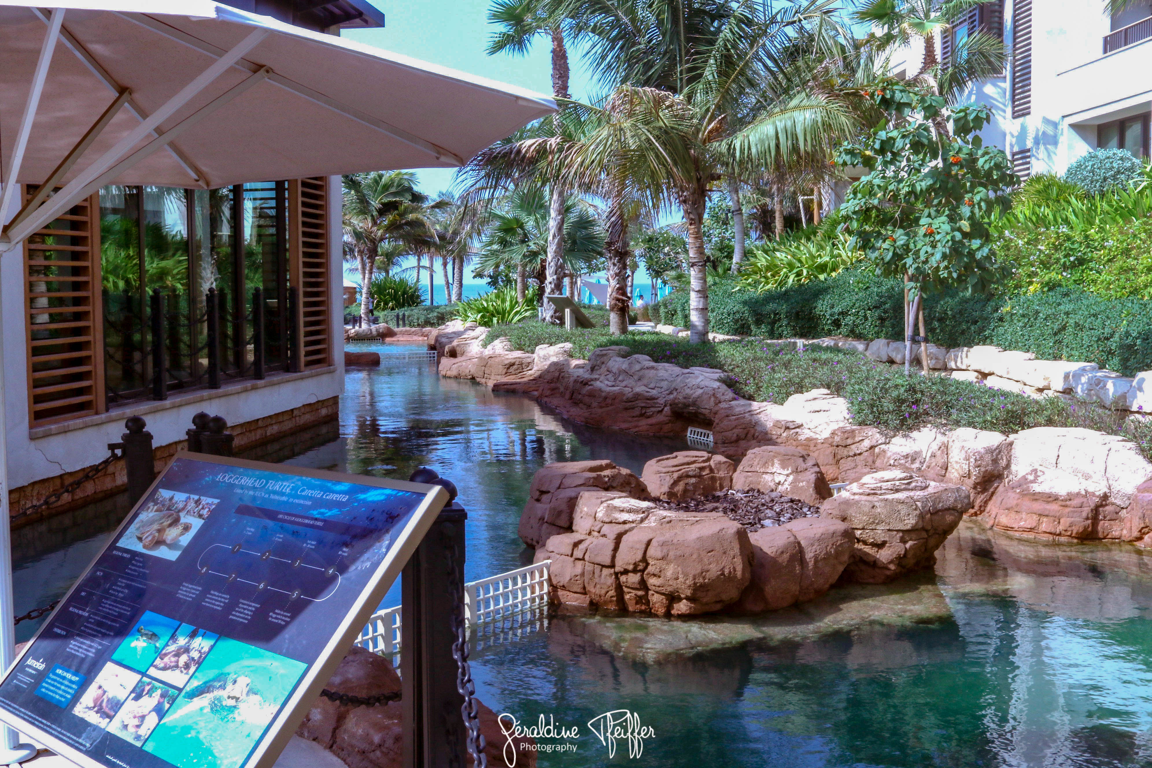 dubai rehabilitation turtle project