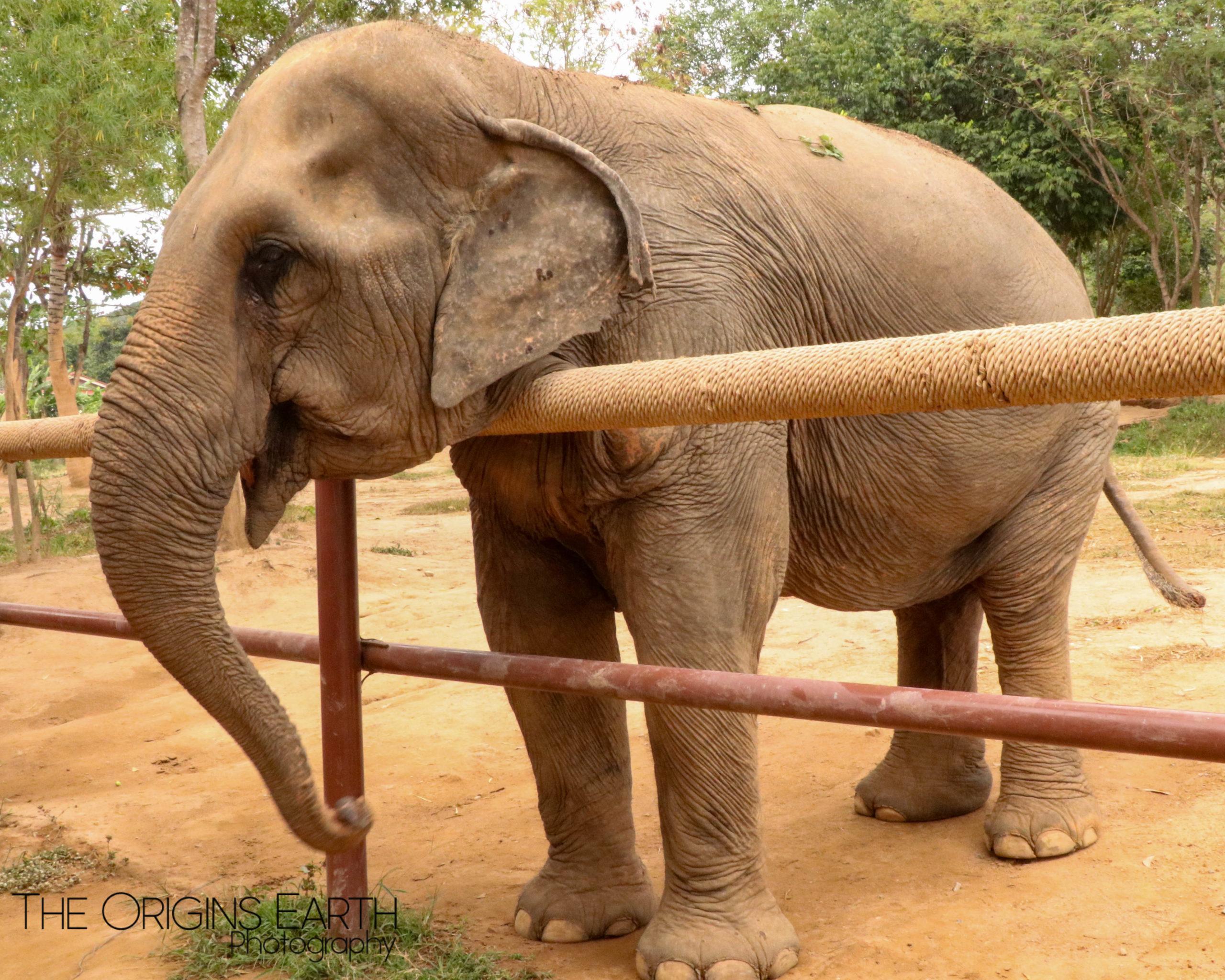 Ko Samui Elephant sanctuary