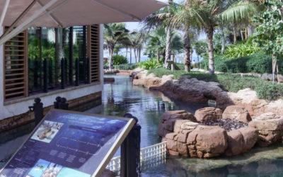 Le projet de réhabilitation des tortues de Dubaï
